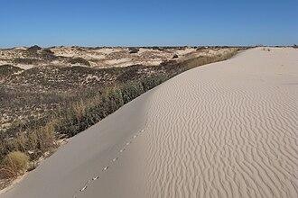 Sandhill - Sandhills near Monahans, Texas