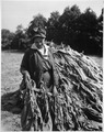 "Mrs. Sam Crawford helps with tobacco harvesting on her husband's farm in Maryland."", 10-08-1943 - NARA - 532819.tif"