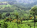 Munnar Tea Plantations, Awesome - panoramio.jpg