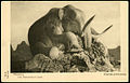 Museum of Zoology SPb 000000506 1 m.jpg