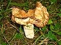 Mushroom (2745603588).jpg