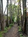 Mushroom Green, Dudley Wood - geograph.org.uk - 1267533.jpg
