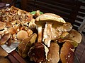 Mushrooms Boletus.jpg