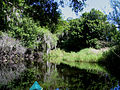 Myakka River - Kayaking.jpg