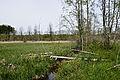 NSG-BW-RV-4221 Lochmoos 31.05.2014-8NWL.jpg