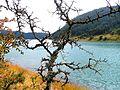 Nacionalni park Tara; Jezero Zaovine 02; Bodljikavo drvo.JPG