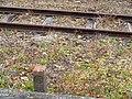 Nagoya Railroad Boundary stones.jpg