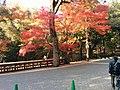 Nara Park (15872969906).jpg