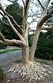 National Arboretum in April (22945401054).jpg
