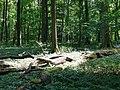 Nationalpark Hainich craulaer Kreuz 2020-06-03 5.jpg