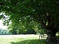 Naturdenkmal Hainbuche Döhren Melle -Unterm Baum- Datei 8.jpg