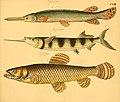Naturgeschichte in Bildern mit erläuterndem Text (Taf. CXIII) (6058678115).jpg