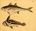 Naturgeschichte in Bildern mit erläuterndem Text (Taf. LXVI) (6059215156).jpg