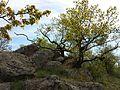 Naturschutzgebiet Fehhaube-Kogelsteine sl23.jpg