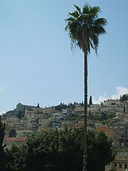 Nazareth Palm Tree 200704