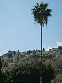 Nazareth Palm Tree 200704.JPG