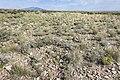Near Deadman Canyon - Flickr - aspidoscelis (1).jpg