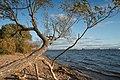 Neva Bay in Lakhta-Olgino 2020-10-17.jpg