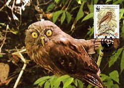 Ninox philippensis centralis 2004 stamp+card of the Philippines.jpg