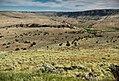 North Fork Owyhee Wild & Scenic River (34821412830).jpg