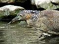 Not Good at Fishing (15968020604).jpg