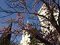 Notre Dames de Doms - panoramio.jpg