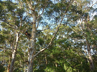 Outward Bound Australia - Outward Bound High Ropes Course