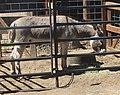 Oak Glen, Los Rios Rancho 6-2012 (7409450422).jpg