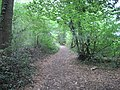 Oak Hill Wood path.JPG