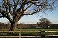 Oak at 'Lansdowne Farm' - geograph.org.uk - 2227819.jpg