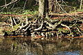 Odenthal - Naturschutzgebiet Dhünnaue - Dhünn 01 ies.jpg