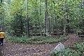 Ohiopyle State Park River Trail - panoramio (10).jpg