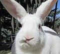 Oliver - the foster rabbit.jpg