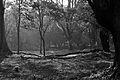 One afternoon at Botanical Garden V (8358160922).jpg