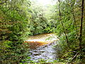 Oparara Basin the River 2.JPG