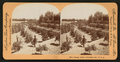 Orange Grove, Riverside, Cal, U.S.A, from Robert N. Dennis collection of stereoscopic views 2.png
