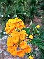 Orange flowers1.jpg