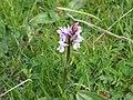 OrchidSaleve1.jpg