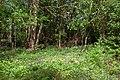 Orchids on Horsham Stone - geograph.org.uk - 420939.jpg