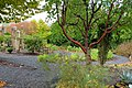 Oregon Garden - Silverton, Oregon - DSC00142.jpg