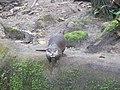Otter in Burgers Zoo.jpg