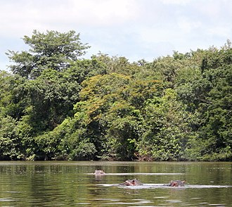 Geography of Sierra Leone - Hippopotami in the Outamba-Kilimi National Park in Sierra Leone's northwest.