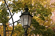 Outdoor lantern and Acer platanoides leaves in autumn.jpg