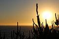 Pôr do sol à beira do mar em Viña del Mar.jpg