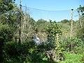 Paignton , Paignton Zoo Lake - geograph.org.uk - 1483492.jpg