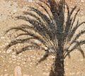 Palm shadow (32835844835).jpg
