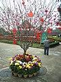 PanYu Clifford Farm Tree New year plants.jpg
