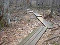 Parker Woodland planks.jpg