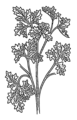 Parsley (PSF).png