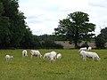 Pasture, Tadley - geograph.org.uk - 1776017.jpg